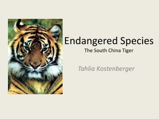 Endangered Species The South China Tiger
