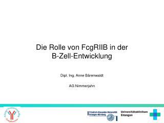Die Rolle von FcgRIIB in der  B-Zell-Entwicklung