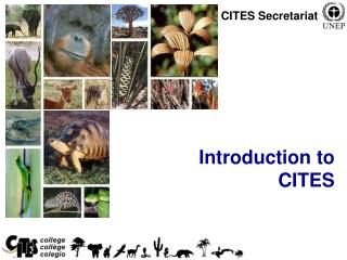 Introduction to  CITES