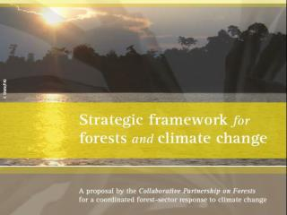 Rationale:  A need for concerted action A strategic response from all 14 CPF members