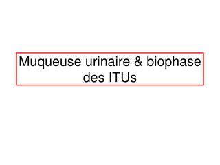 Muqueuse urinaire & biophase des ITUs