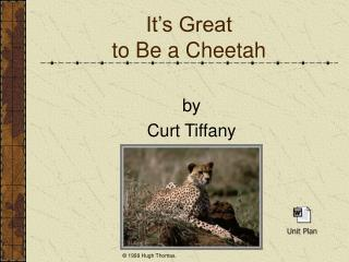 It s Great  to Be a Cheetah