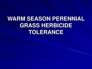 WARM SEASON PERENNIAL GRASS HERBICIDE TOLERANCE