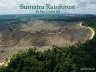 Sumatra Rainforest