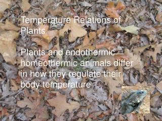 Temperature Relations of Plants
