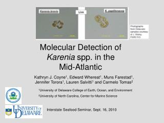 Molecular Detection of  Karenia  spp. in the Mid-Atlantic
