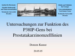 Untersuchungen zur Funktion des P38IP-Gens bei Prostatakarzinomzelllinien