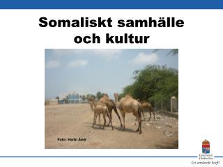Somaliskt samhälle  och kultur