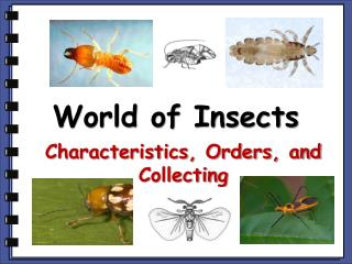 World of Insects