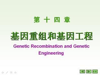??? DNA ??? DNA  Recombination