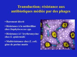 Transduction; r�sistance aux antibiotiques m�di�e par des phages