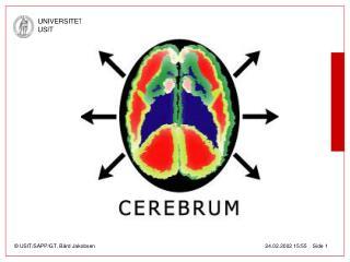Cerebrum, en BAS