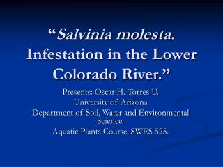 """ Salvinia molesta . Infestation in the Lower Colorado River."""