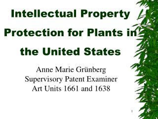 Intellectual Property Protection for Plants in the United States
