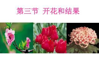 第三节 开花和结果