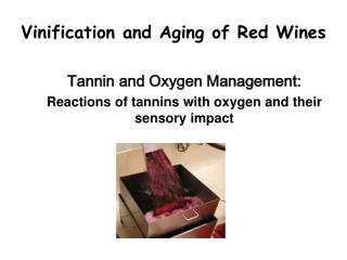 Vinification and Aging of Red Wines