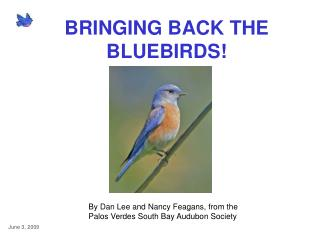 BRINGING BACK THE BLUEBIRDS!