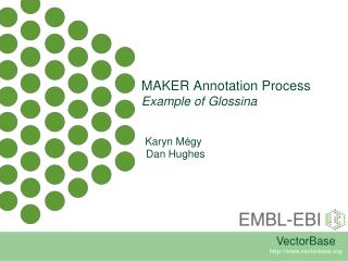 MAKER Annotation Process Example of  Glossina