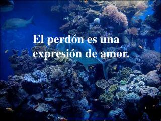 El perd n es una expresi n de amor.