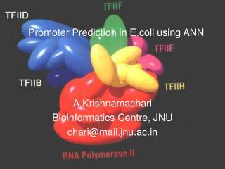 Promoter Prediction in E.coli using ANN
