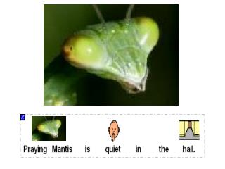 Praying Mantis is quiet in the hall.