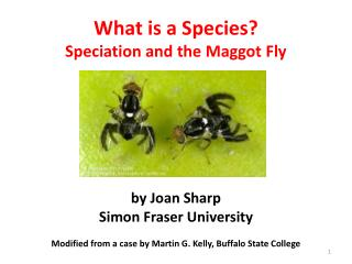 What is a Species Speciation and the Maggot Fly       by Joan Sharp Simon Fraser University  Modified from a case by Mar