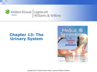 Chapter 13: The Urinary System
