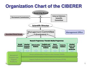 Organization Chart of the CIBERER