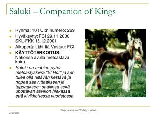 Saluki – Companion of Kings