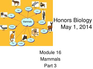 Honors Biology May 1, 2014