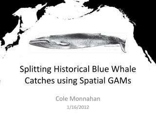 Splitting Historical Blue Whale Catches using Spatial GAMs