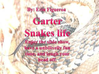 Garter  Snakes life Enjoy the slide  show, have a unbilivelly fun time, and laugh your head off.