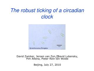 The robust ticking of a circadian clock