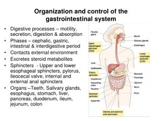 Organization and control of the  gastrointestinal system