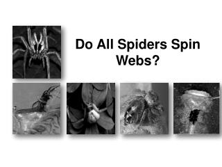 Do All Spiders Spin Webs