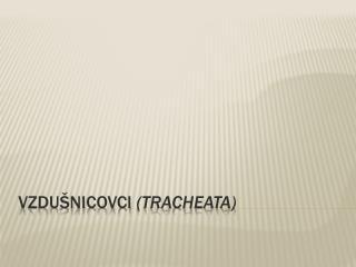 VZDUŠNICOVCI  ( tracheata )