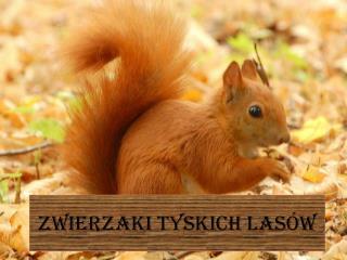 Zwierzaki tyskich  las�w