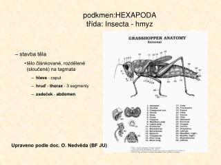 podkmen:HEXAPODA třída:  Insecta - hmyz