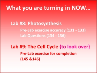 Lab 8: Photosynthesis