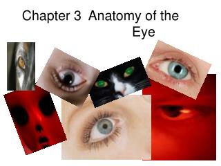 Chapter 3  Anatomy of the    Eye
