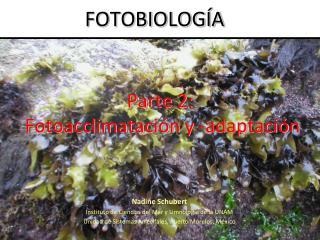 Parte 2: Fotoacclimatación  y - adaptación