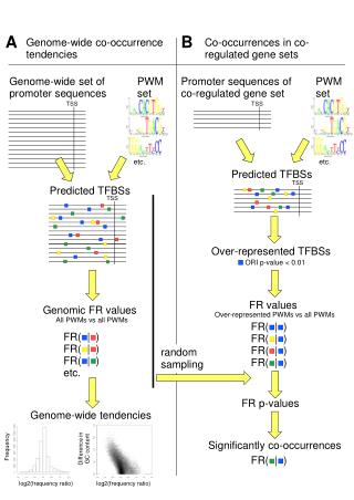 Genome-wide co-occurrence tendencies