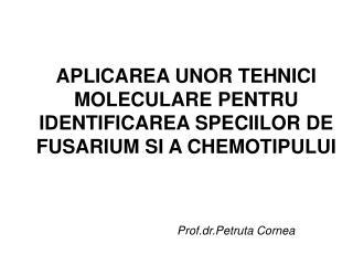 APLICAREA UNOR TEHNICI MOLECULARE PENTRU IDENTIFICAREA SPECIILOR DE FUSARIUM SI A CHEMOTIPULUI