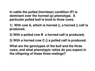 Therefore, you know that cows A and C are homozygous recessive (pp)