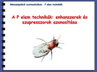 G �nmanipul�ci� ecetmuslic�ban:  P elem technik�k