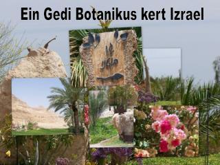 Ein Gedi Botanikus kert Izrael