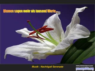 Blumen sagen mehr als tausend Worte....
