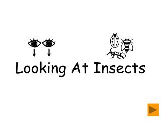 Looking At Insects