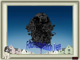 Fotomanipulation Tiere