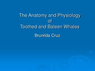 The Anatomy and Physiology  of  Toothed and Baleen Whales